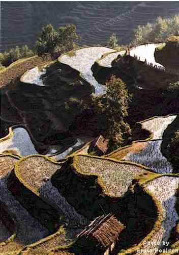 Rice Terraces of Longsheng